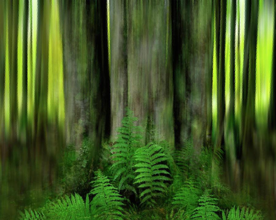 Forest's Floor by Dianna Lynn Walker