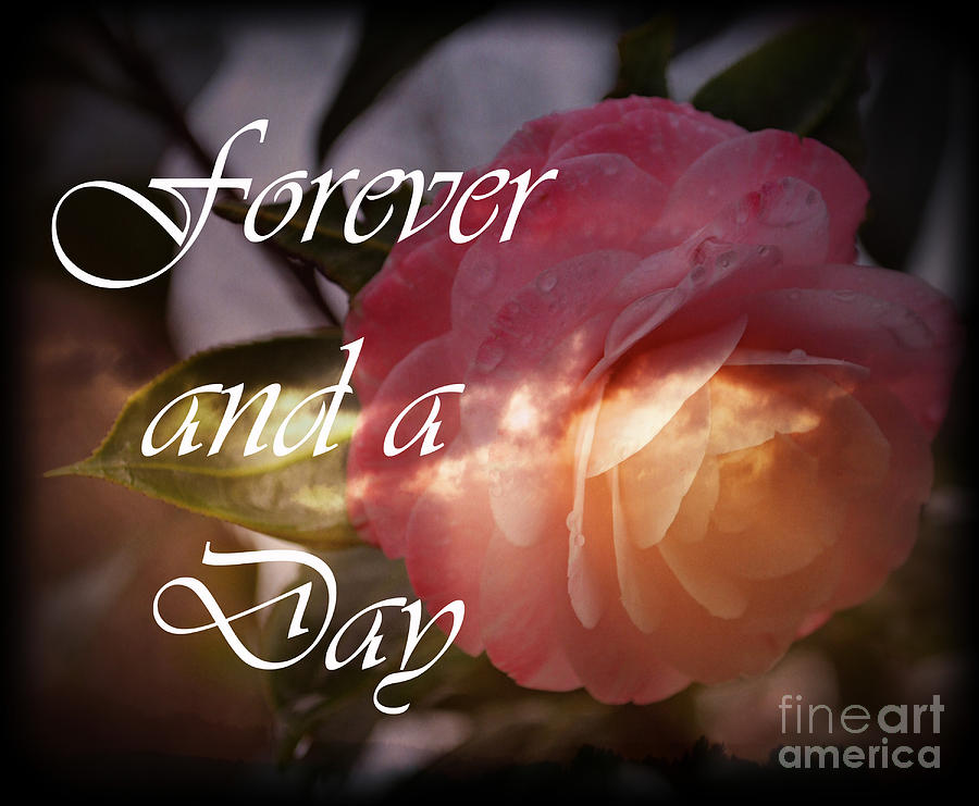 Botanical Photograph - Forever And A Day by Eva Thomas