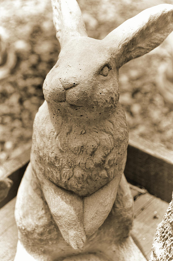 Stone Photograph - Forever Buck Bunny by JAMART Photography
