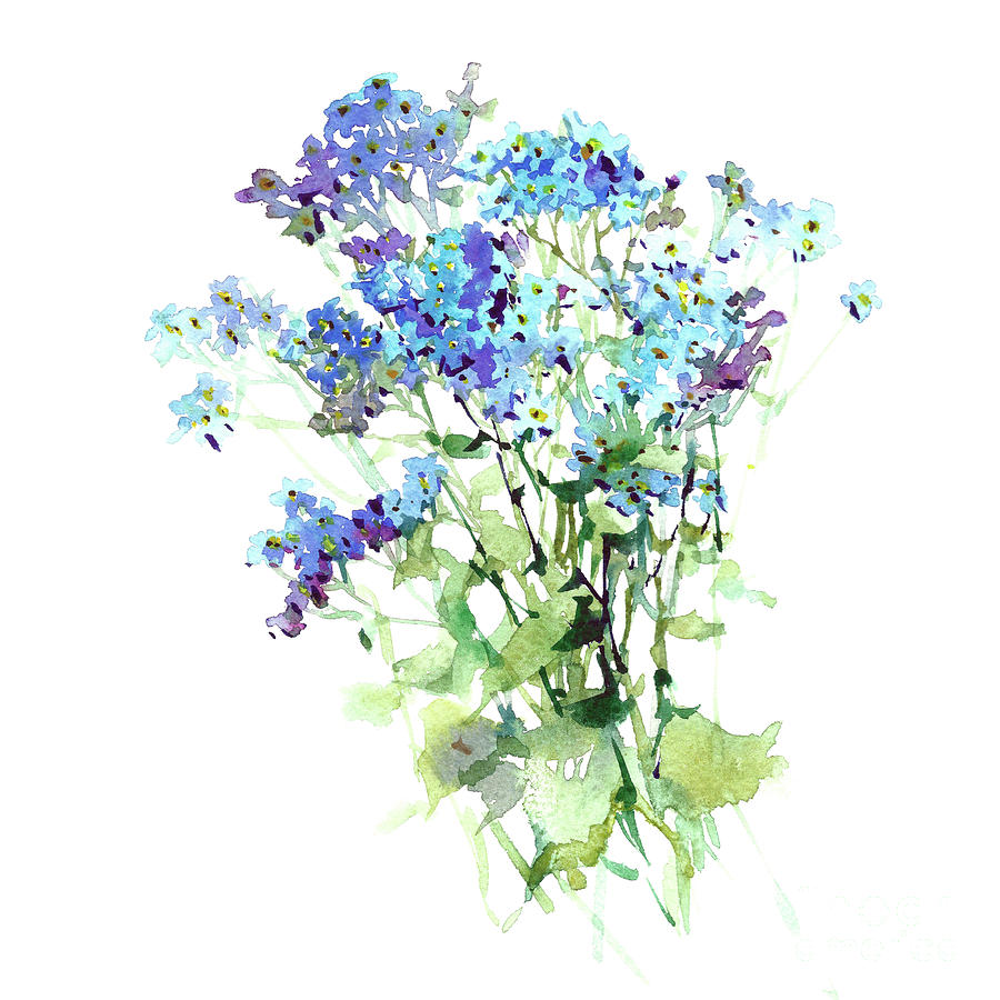 Forget Me Not Watercolor Flowers Art Hand Draw Painting By Mary