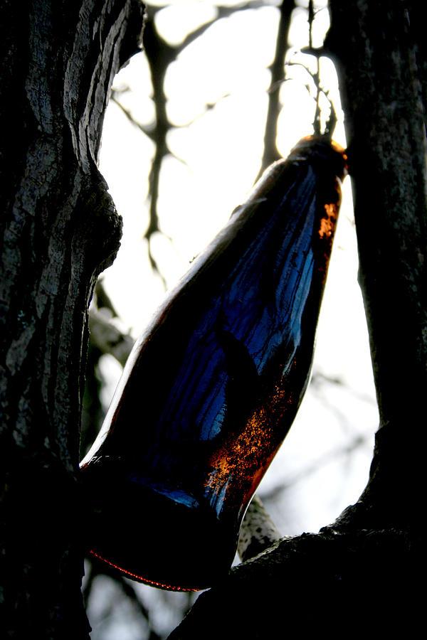 Bottle Photograph - Forgotten by Alexandra Harrell