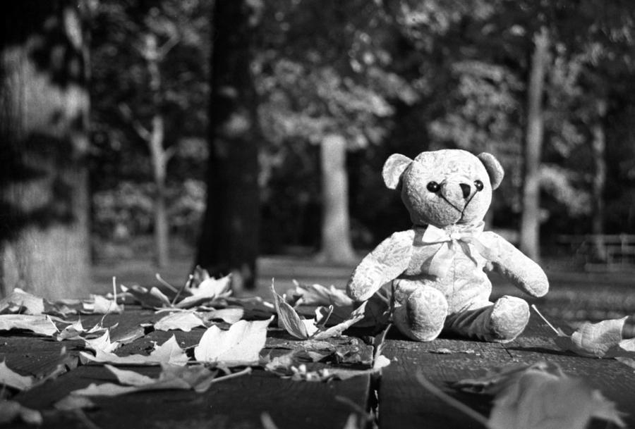 Bear Photograph - Forgotten Childhood by Ian Van Schepen