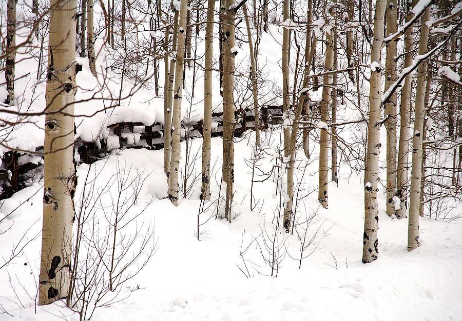 Aspen Photograph - Forgotten Fence by Mark Braun