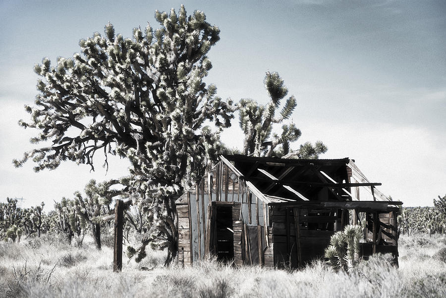 Joshua Tree Photograph - Forgotten by Nancy Killam