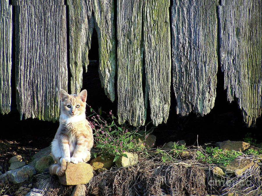 Cat Photograph - Formal Portrait by Pete Hellmann