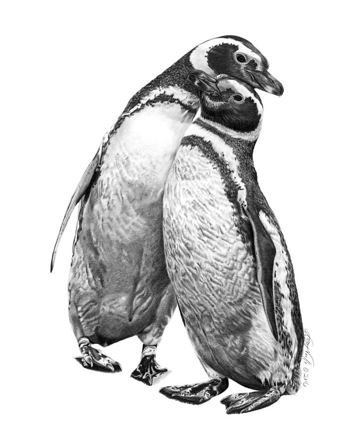 Forrest and Jenny the Penguins by Abbey Noelle
