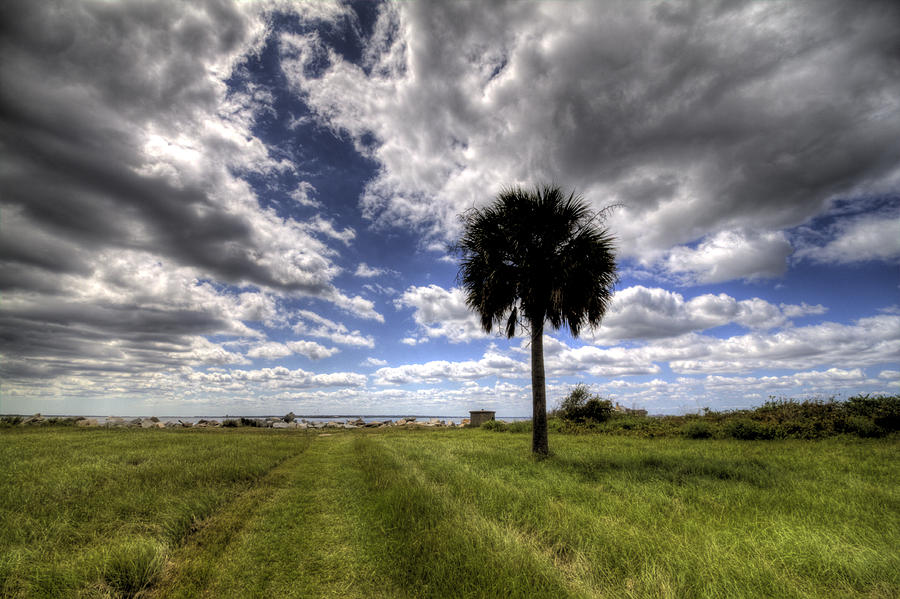 Fort Photograph - Fort Moultrie Palm  by Dustin K Ryan