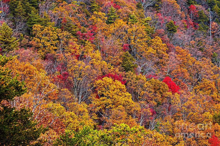 Color Photograph -  Fort Mountain State Park Cool Springs Overlook by Bernd Laeschke
