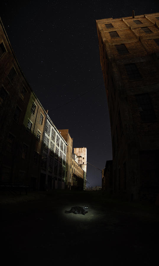 Abandoned Photograph - Fort William Starch Works Cat Heaven by Jakub Sisak