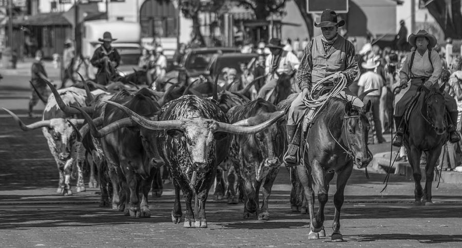 Fort Worth Longhorn Cattle Drive Wide Photograph By Jonathan Davison