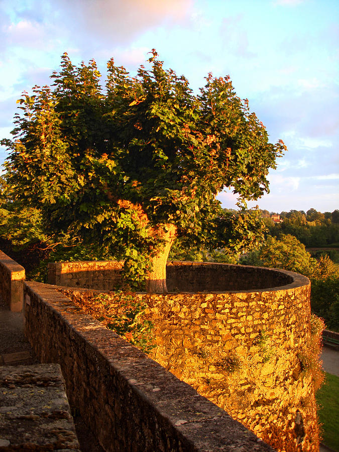 Fortress Photograph - Fortress Tree At Sunset In Le Dorat by Menega Sabidussi