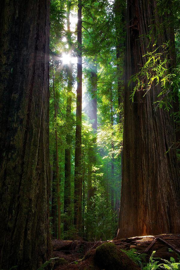 Landscape Photograph - Founders Tree Sunset by Joe Urbz