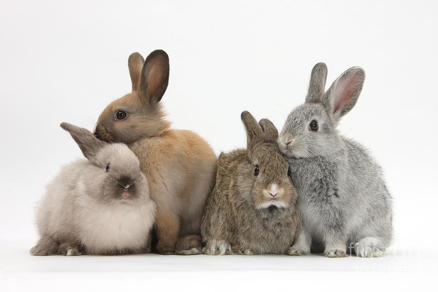 фото с тремя зайцами отдых