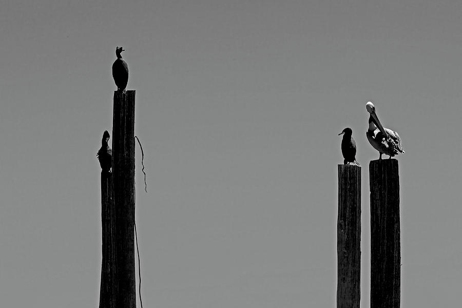 Four Birds On Photograph by Kim Doyoung