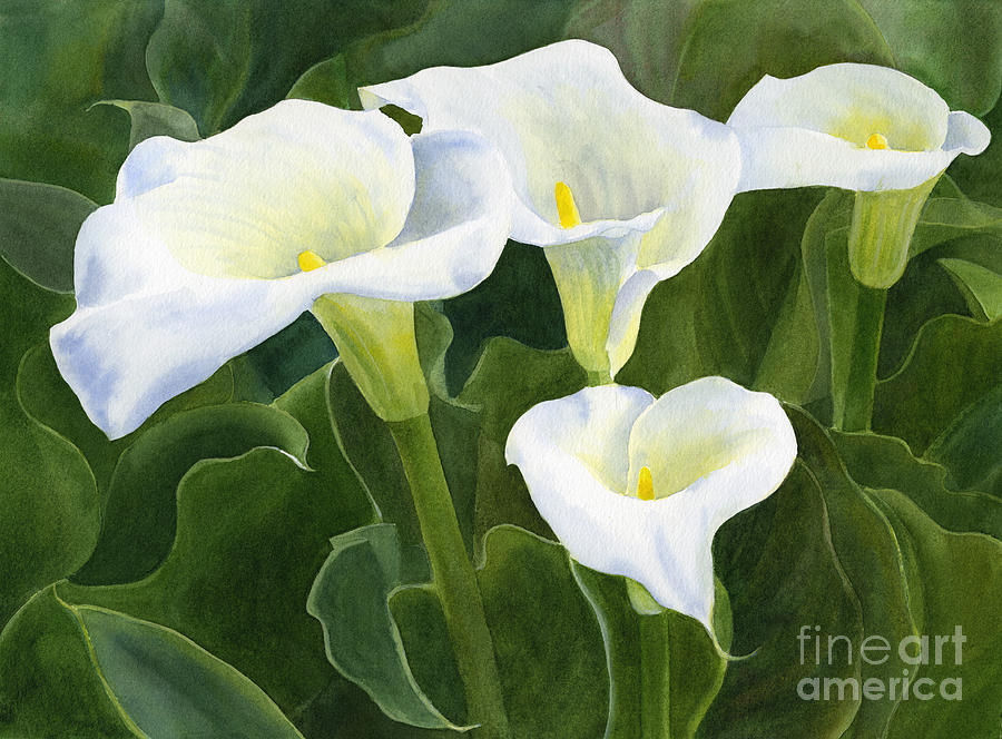 White Lily Canvas Painting
