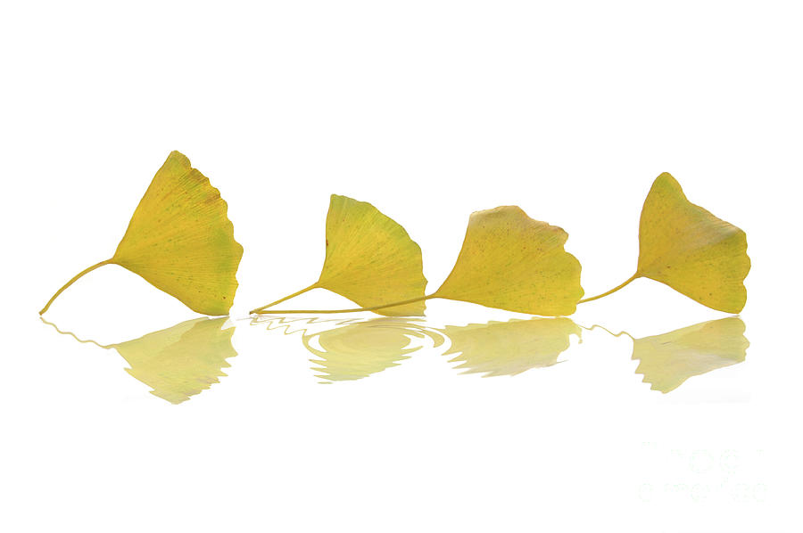 Leaves Photograph - Four Leaves by Delphimages Photo Creations
