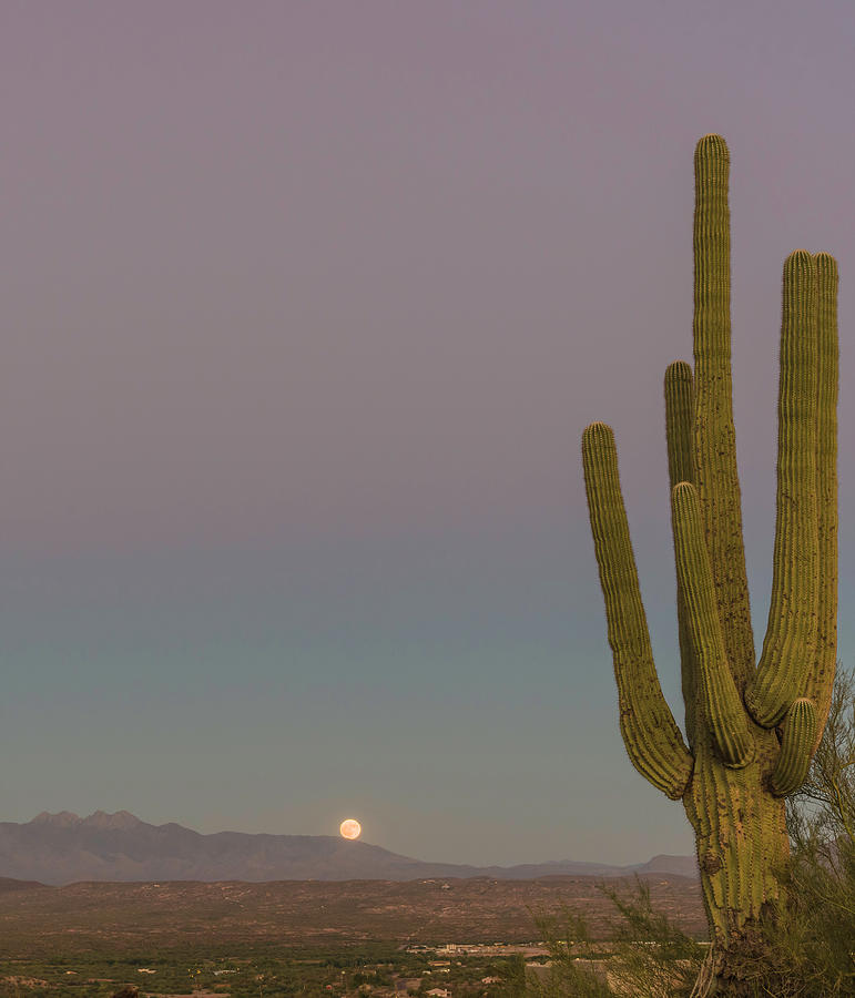 Saguaro Photograph - Four Peaks Moonrise by Mike Herdering
