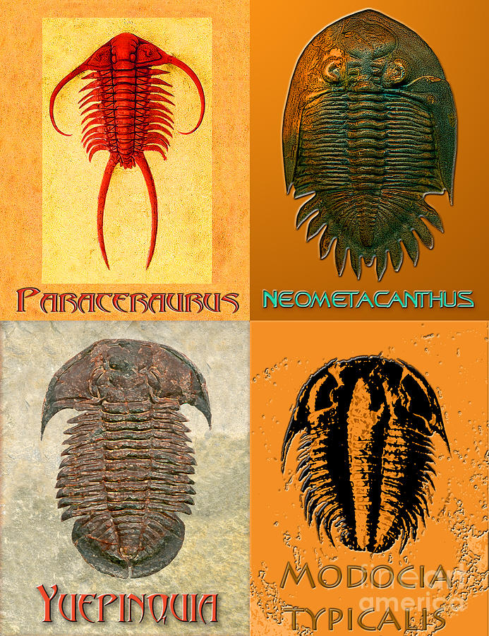 Trilobite Digital Art - Four Trilobites by Melissa A Benson