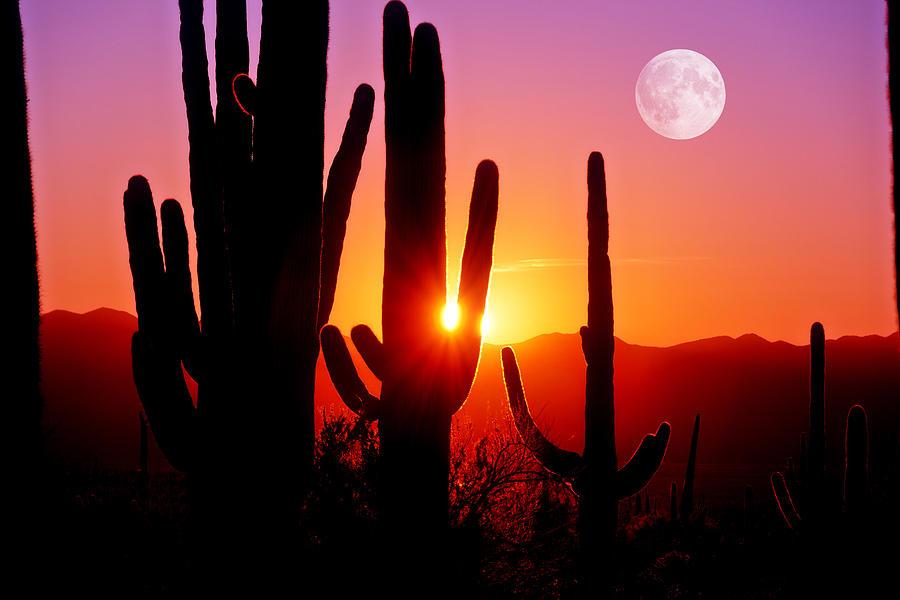 Fourth Sunset at Saguaro by John Hoffman