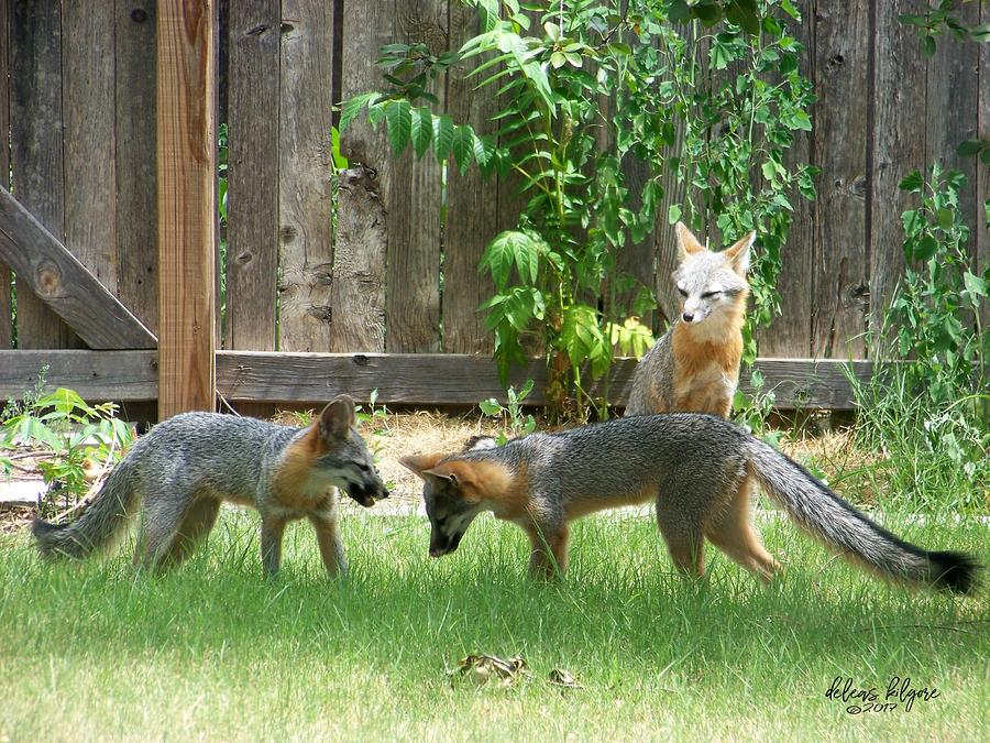 Fox Family by Deleas Kilgore