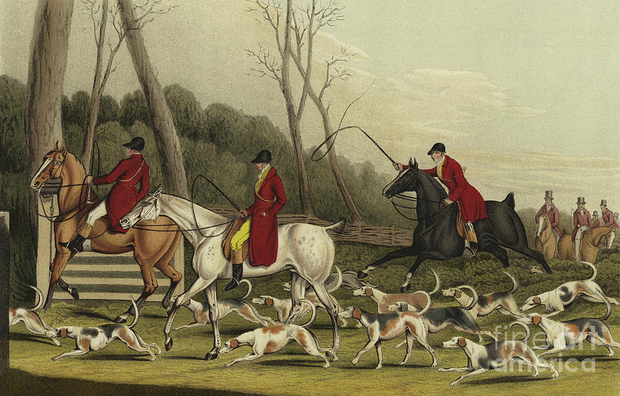 Fox Painting - Fox Hunting Going Into Cover by Henry Thomas Alken