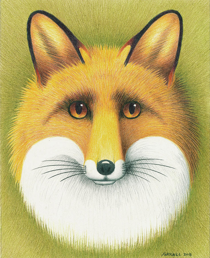Drawing Drawing - Fox Portrait by Mike Farrell