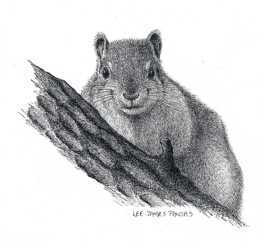 Squirrel Drawing - Fox Squirrel by Lee Pantas