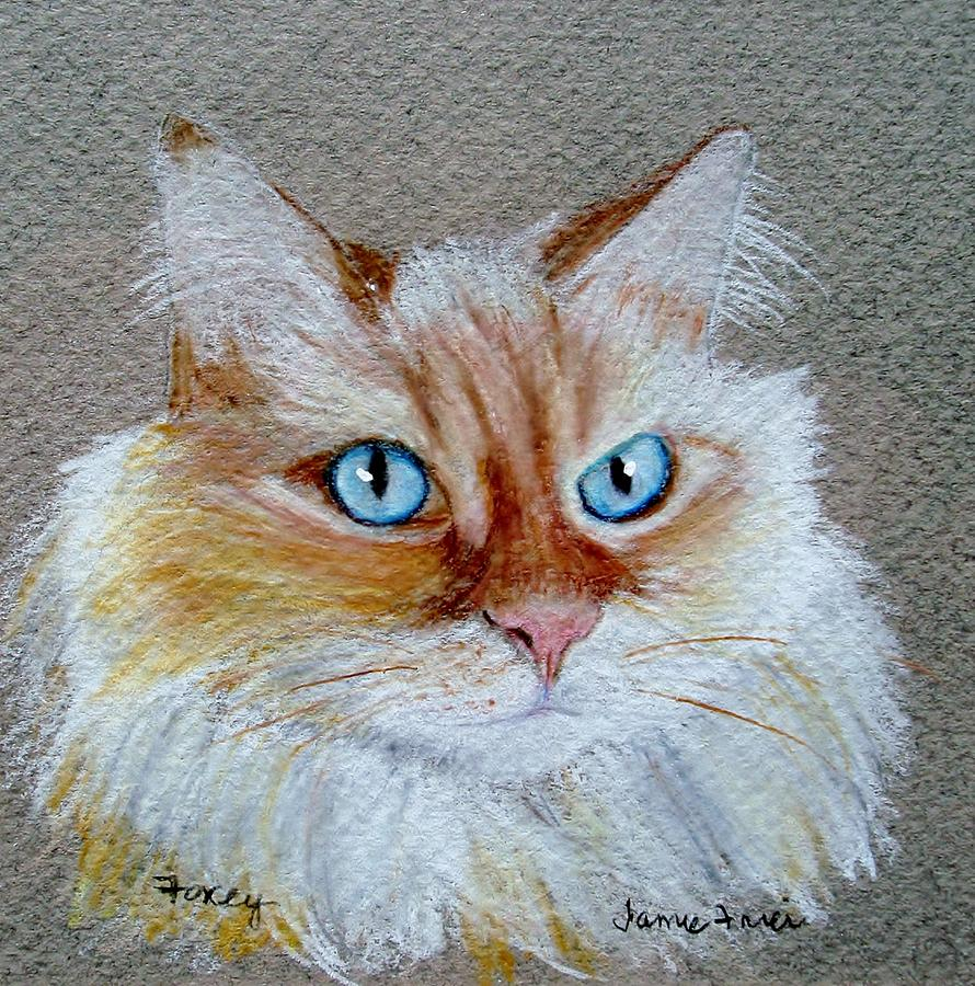 Cat Drawing - Foxey by Jamie Frier