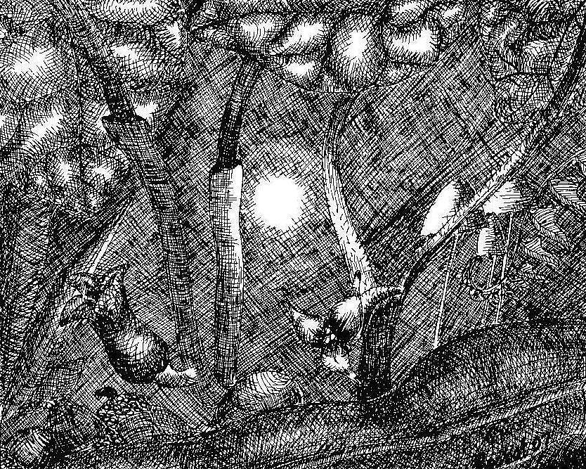 Foxfire Drawing by Melanie Rochat