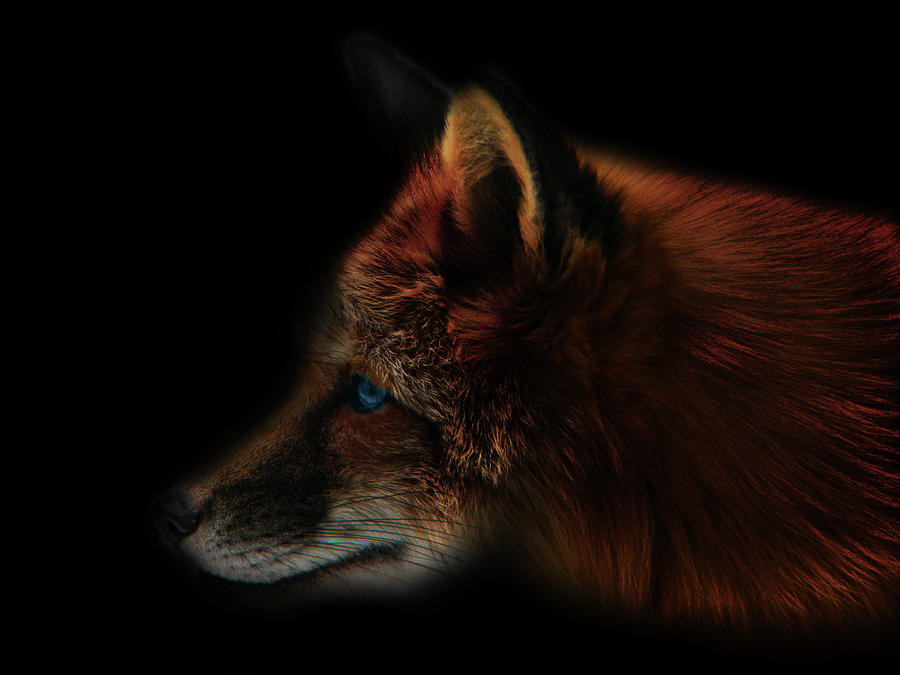 Foxy Profile Photograph