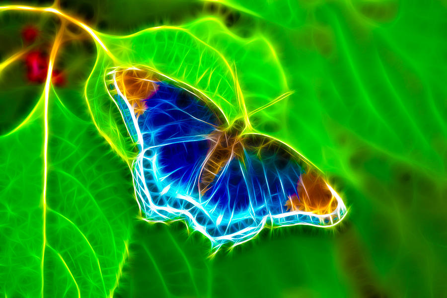 Butterfly Photograph - Fractal Butterfly by Rich Leighton