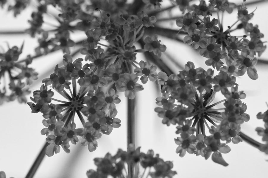 Black Photograph - Fractal Flower Photoset 02 by Ryan Kelly