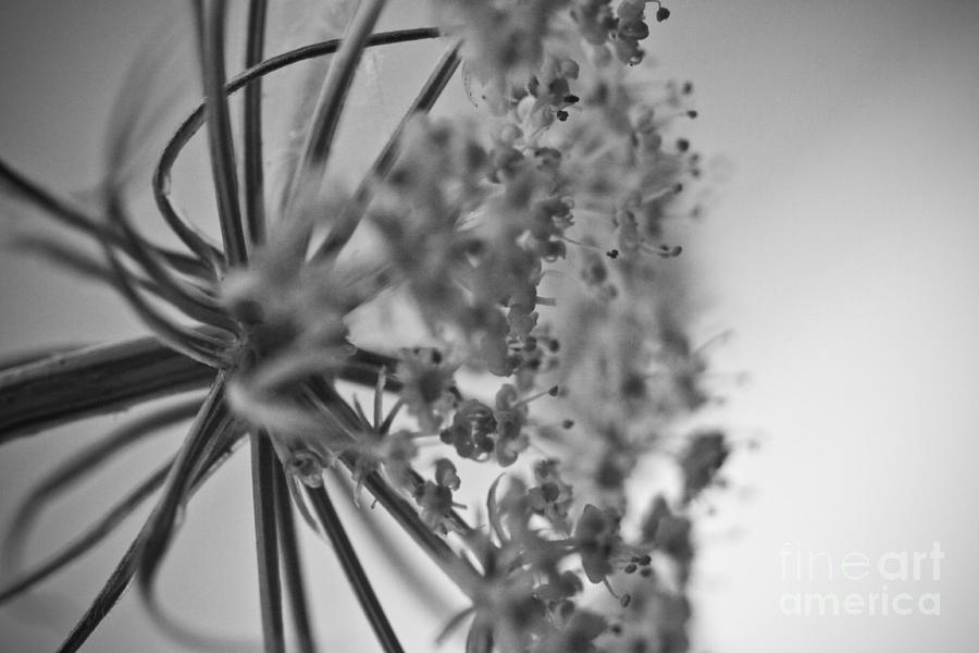 Black Photograph - Fractal Flower Photoset 03 by Ryan Kelly