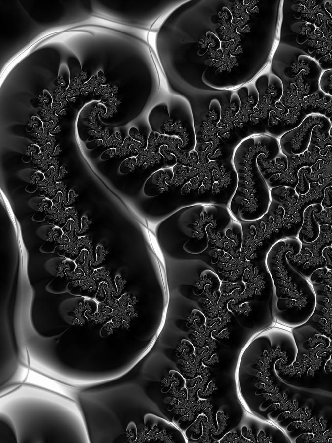 Fractal Veins Black And White Digital Art By Matthias Hauser