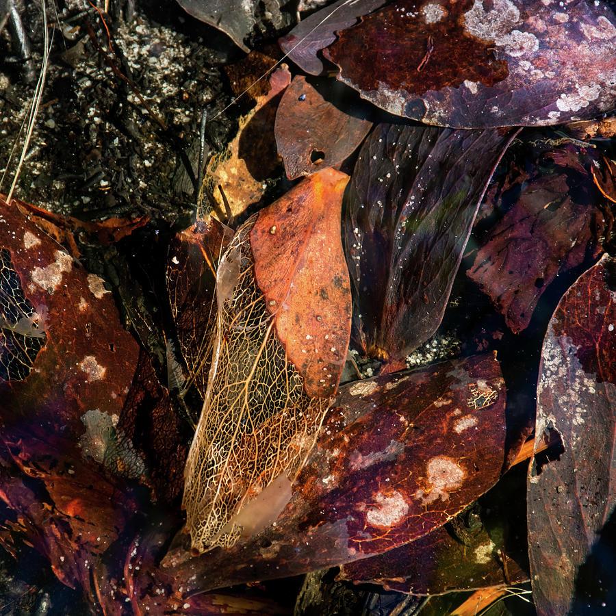 Water Photograph - Fragile frames by Simon Sephton