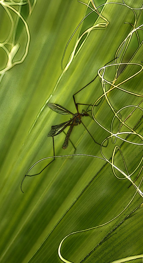 Insect Photograph - Fragile Ties by Barbara  White