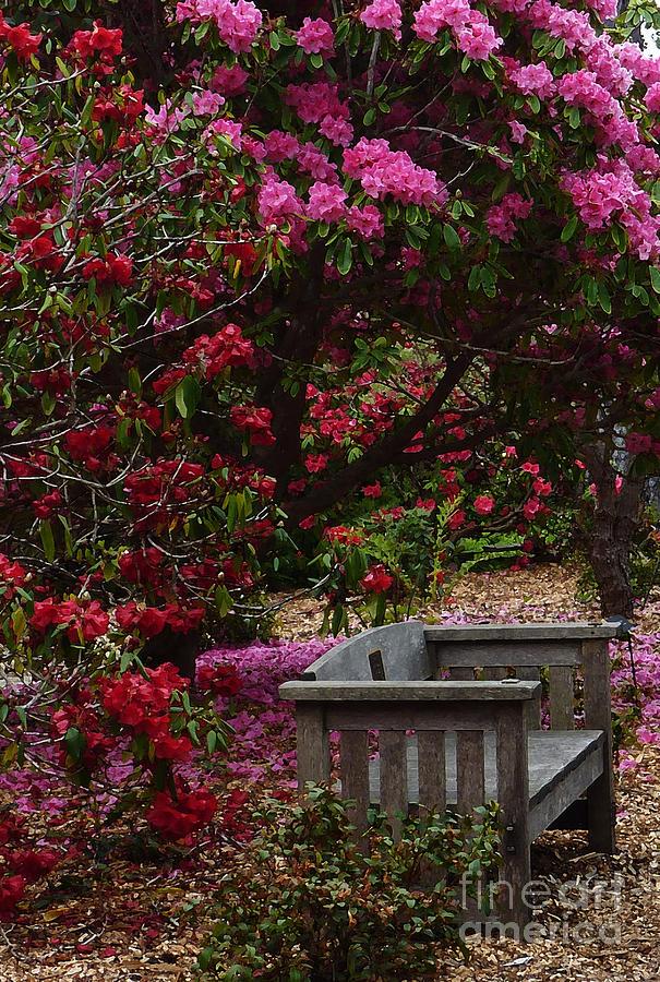 Botanical Gardens Photograph - Fragrant Throne by JoAnn SkyWatcher