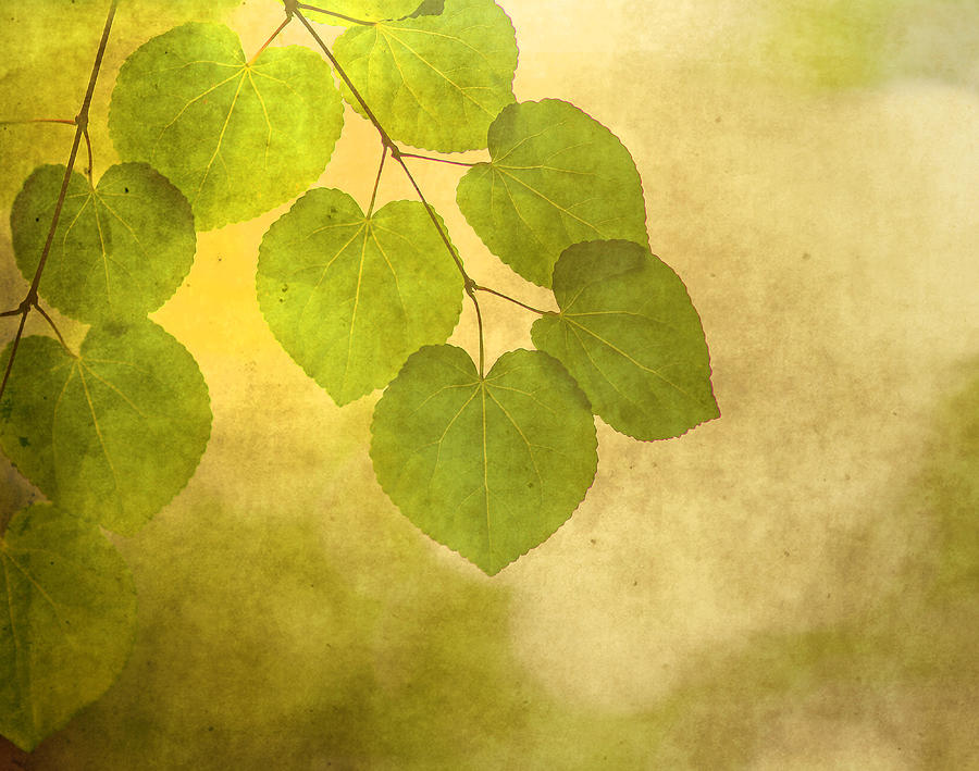 Leaves Photograph - Framed In Light by Rebecca Cozart