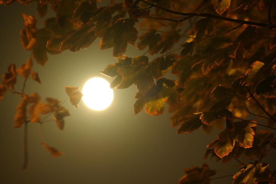 Framed Moon Photograph
