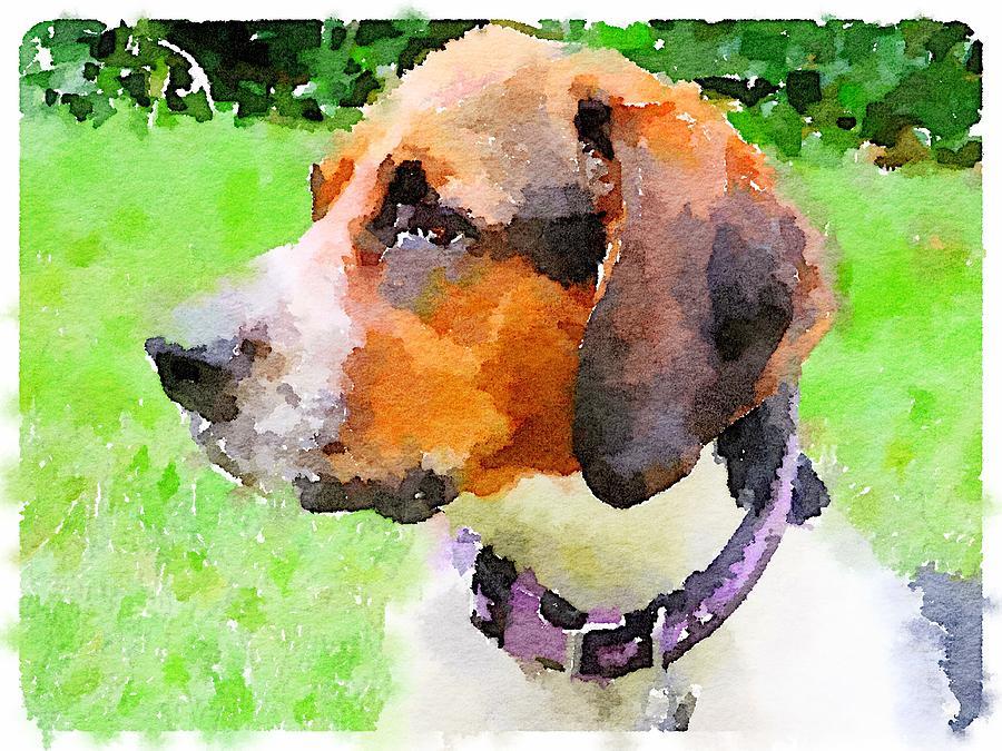 Francesca the Coonhound by Elizabeth Rose