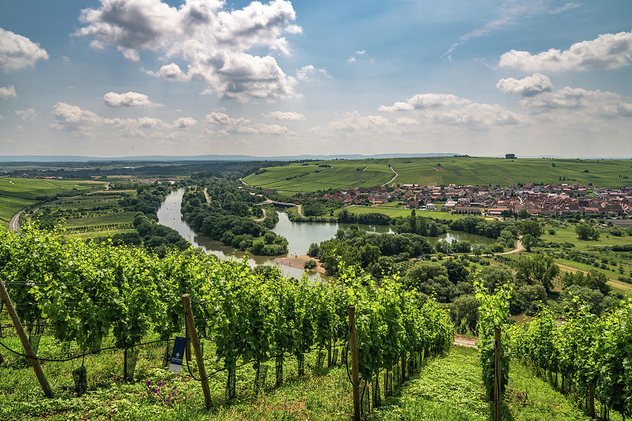 Germany Photograph - Franconian Vineyards by Framing Places