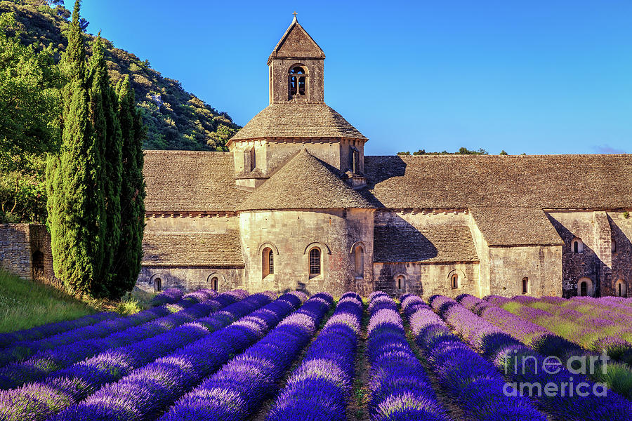 France Photograph - All Purple, Cistercian Abbey Of Notre Dame Of Senanque, France  by Kim Petersen