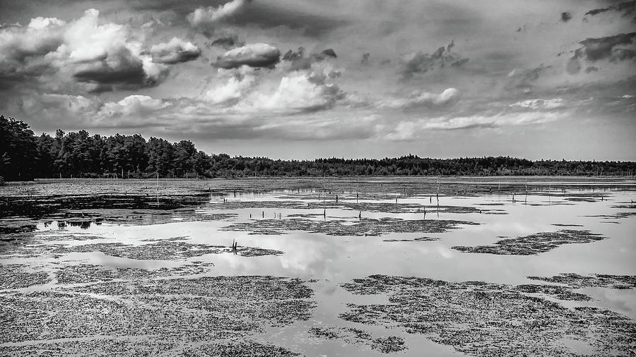 B&w Photograph - Franklin Parker Preserve Landscape by Louis Dallara