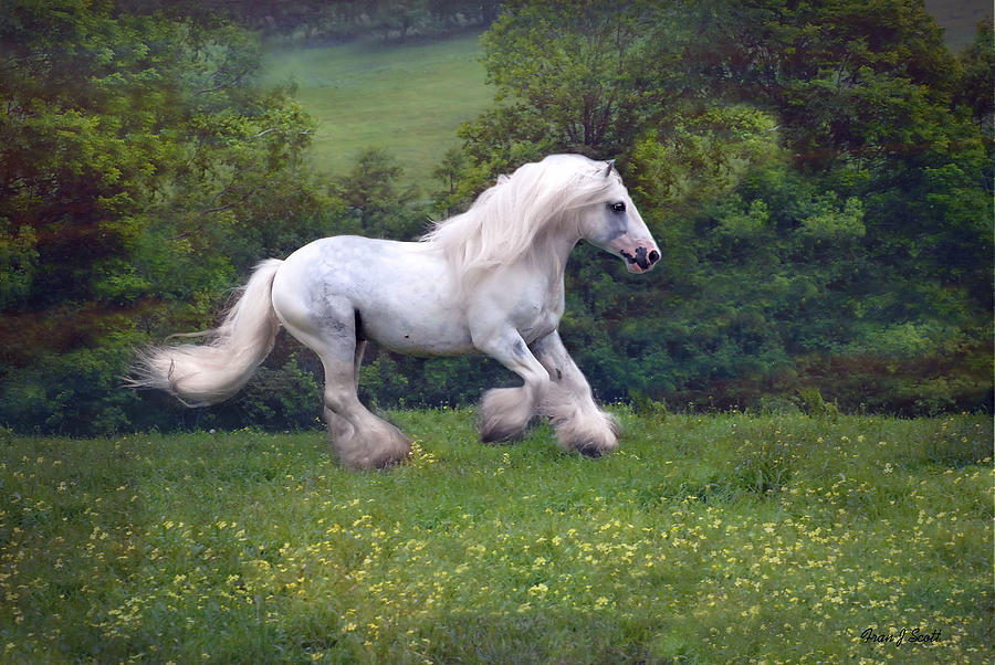Horse Photograph - Free Billy by Fran J Scott