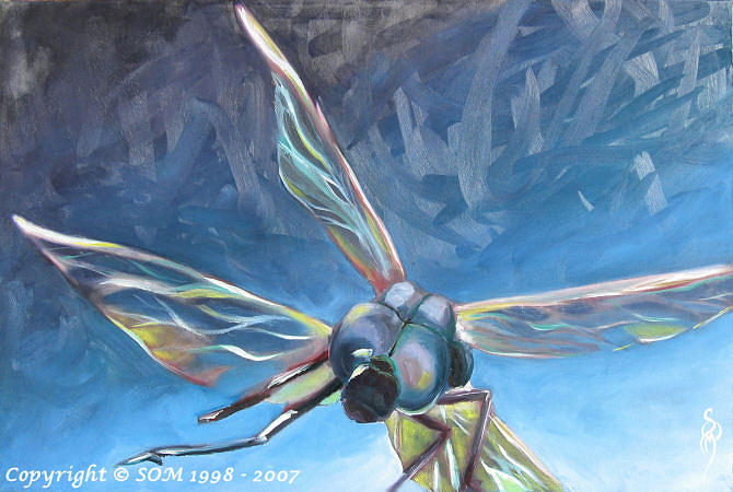 Oil Painting - Free Fly by Sharina O Maloney
