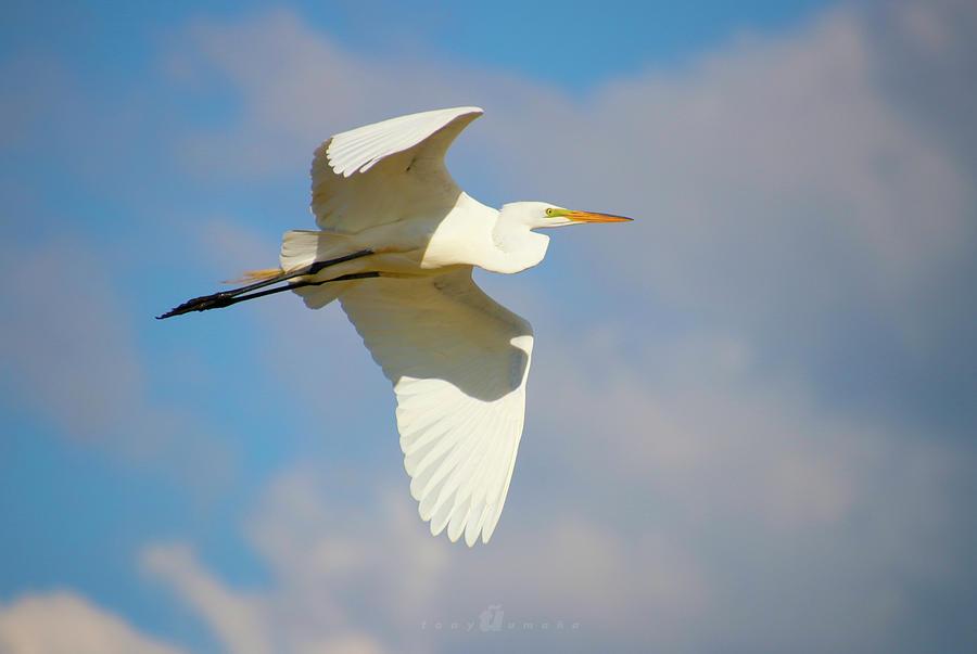 Free Flying Photograph by Tony Umana