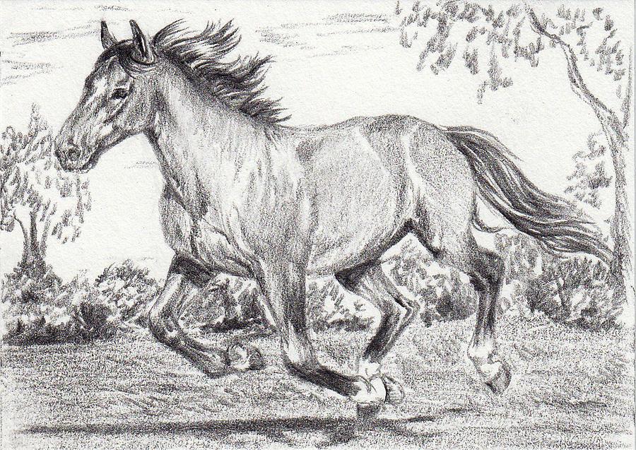 Free Run Drawing by Dana John - photo#22