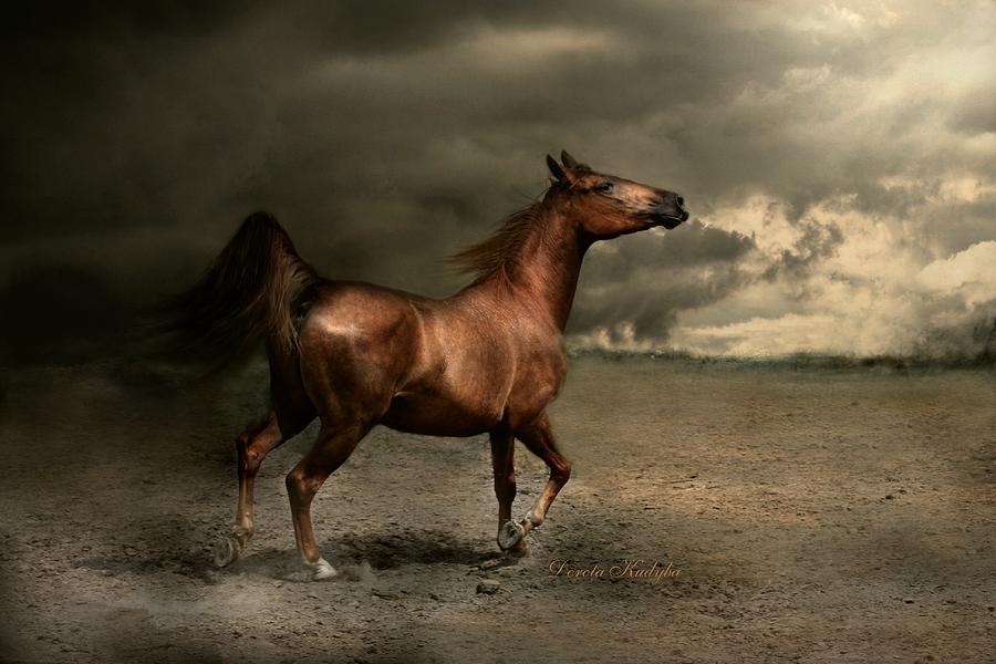 Horse Photograph - Free Spirit by Dorota Kudyba