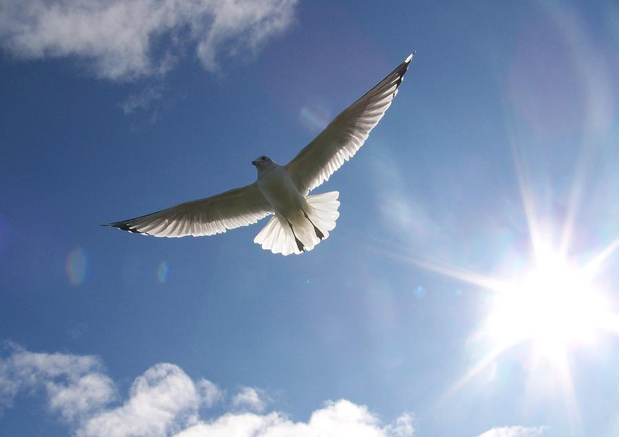 Gull Photograph - Freedom - Photograph by Jackie Mueller-Jones