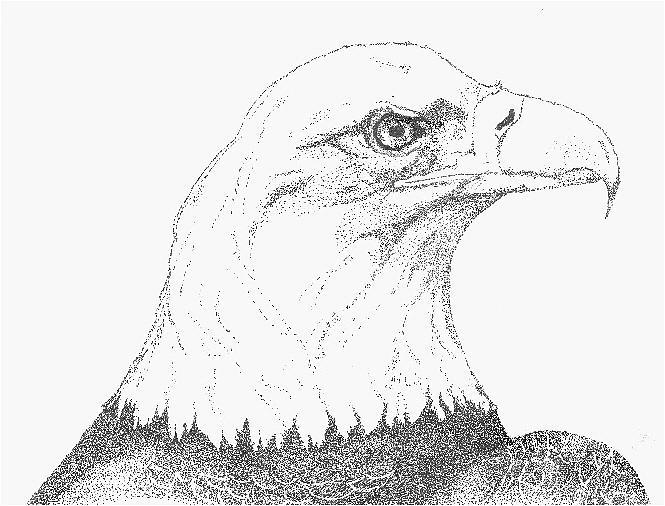 Eagle Drawing - Freedom by Debra Sandstrom